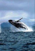 """Обложка книги """"Прощайте киты"""""""